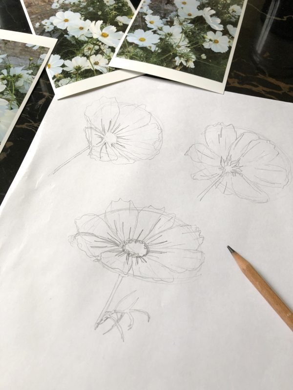 Croquis fleurs de cosmos