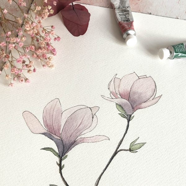 Fleurs de magnolias